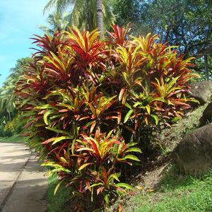 Les Plantes Répulsives,     Anti-insectes