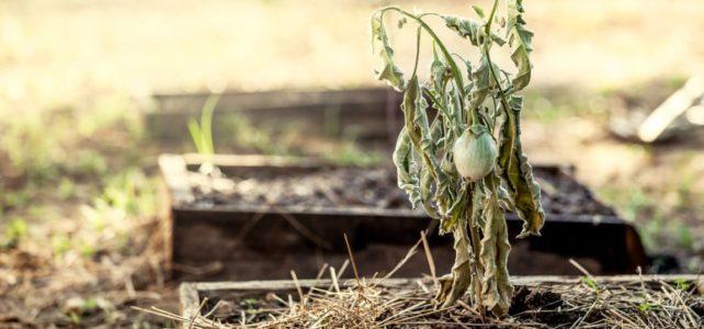 Lutter contre la sécheresse dans les jardins calédoniens